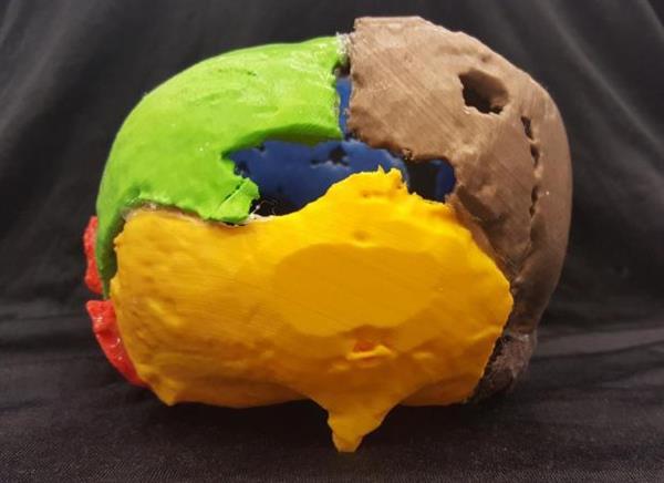 3D-печатная копия королевского черепа