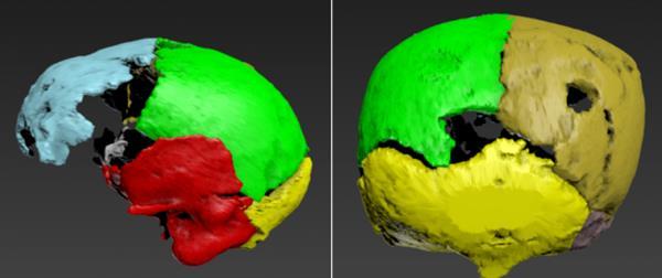 изображение черепа